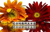 Congrats With Red And Yellow Flowers