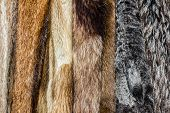picture of opulence  - Close up of an animal colored fur texture arranged in coats - JPG