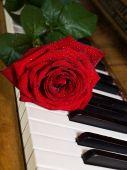 Red Rose On Keys