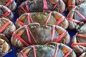 Schlamm-Krabben