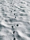 stock photo of animal footprint  - An animals footprints in the fresh snow - JPG