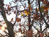 Platanus On A Sunny Day poster