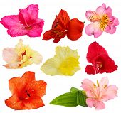 Beautiful buds of gladiolus and alstroemeria flowers isolated on white