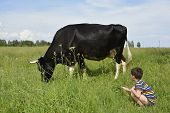 Little Boy Feeds The Cow Grass.