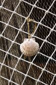 Two Fishing Nets And Shell