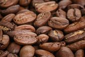 Big Arabica Coffee Beans