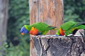 Colorful Parrot Looks Down Photo