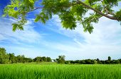 Green Meadow With Big Tree