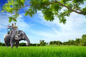 Elephant With Monkey On Green Meadow