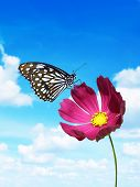 Pink Flower With Butterfly