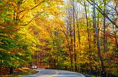 Sunlit Autumn Road