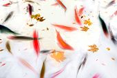 stock photo of koi fish  - Koi Fish Swimming in Pond with Fall Leaves Abstract Watercolor Illustration - JPG