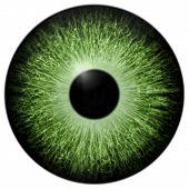 Illustration Of Green Eye