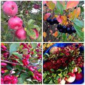 Collage of autumn plants