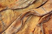 picture of tobacco leaf  - close up of Background of dried tobacco leaves - JPG