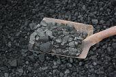 Loading Shovel Coal