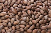 image of pecan nut  - closeup on pecan nuts stacked in a pile - JPG