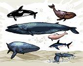 Постер, плакат: Киты под водой