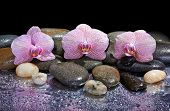 Pebbles And Pink Orchids On Wet Background