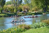 A Busy Day For Rowers On The Avon River, Christchurch.