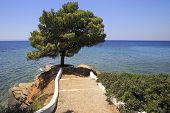 Beautiful pine on a stone ledge into the Aegean Sea.