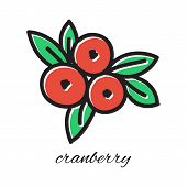 Vector illustration. Doodle cranberry. Hand-drawn object isolated on white background. Easy paste to