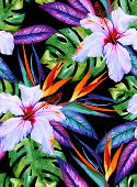 picture of hibiscus  - watercolor seamless exotic pattern with hibiscus plumeria monstera palm bird of paradise drawn in watercolor on black background - JPG