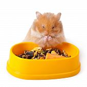 image of hamster  - Baby hamster isolated on a white background - JPG