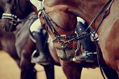 stock photo of stallion  - Portrait of a sports stallion - JPG