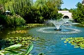 picture of fountain grass  - Fountain in middle of a water garden of lily pads and other water plants - JPG