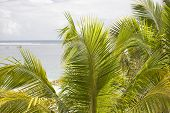 pic of mauritius  - Palm leaves on a tropical beach. Shooting on the island of Mauritius Indian Ocean. - JPG