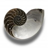 pic of pentagram  - The nautilus shell as an illustration of the golden ratio in nature - JPG