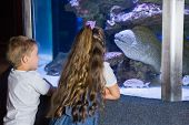 image of inquisition  - Little siblings looking at fish tank at the aquarium - JPG