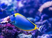 picture of saltwater fish  - Colorful fish in aquarium saltwater world - JPG