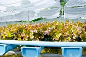 stock photo of hydroponics  - The Organic hydroponic vegetable cultivation farm in Thailand - JPG