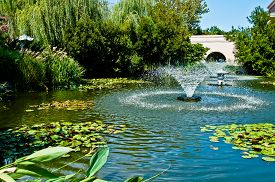 image of fountain grass  - Fountain in middle of a water garden of lily pads and other water plants - JPG