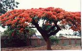 Zambia In Full Bloom