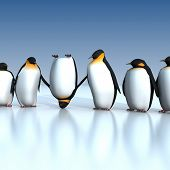 Pinguins divertidos