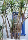 Palme und Fenster