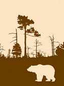 vector silhouette bear on background wild wood