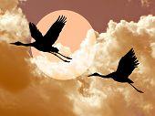 crane in cloudy sky