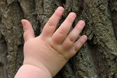 Caucasian children's hand is located on an old stump