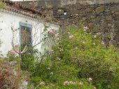old house in flower garten - La palma