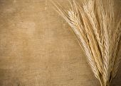 ears spike of wheat on wood texture background