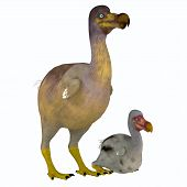 Dodo Bird Female With Young 3d Illustration - The Dodo Is An Extinct Flightless Bird That Lived On M poster