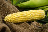 Yellow Organic Corn