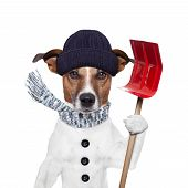 picture of rainy season  - winter dog red shovel snow and hat - JPG