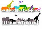 big set of safari animal wildlife