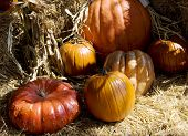 Close Up Of Several Pumpkins