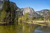 The Merced river in Yosemite Valley with the Yosemite Falls in the background.